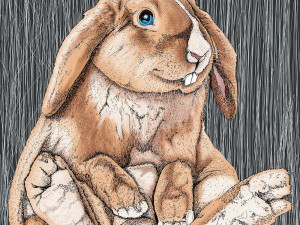 """Ilustración """"Bunny"""""""